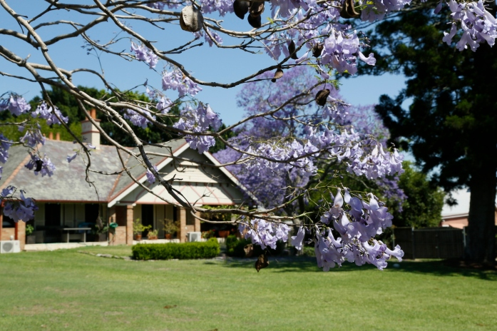 2017-10 Church & Rectory with Jacarandas 14