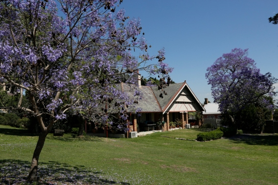 2017-10 Church & Rectory with Jacarandas 15