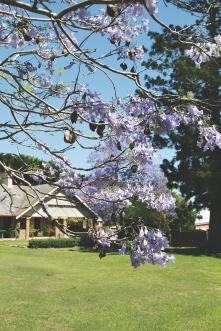2017-10 Church & Rectory with Jacarandas 20