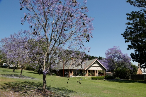 2017-10 Church & Rectory with Jacarandas 24